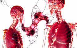 Röntgenbilder von zwei Personen