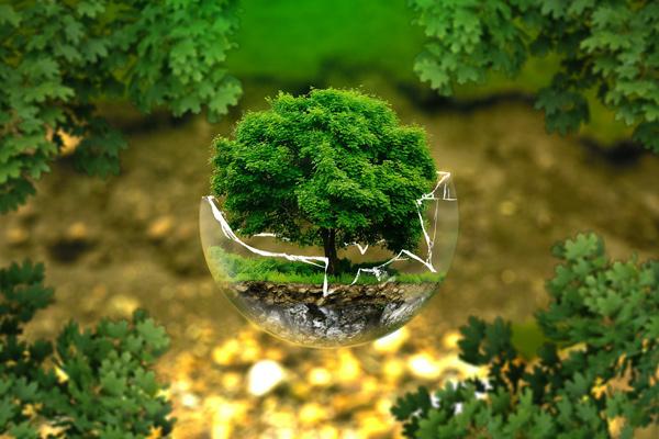 Foto: Baum in einer Glaskugel